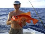 Big Game fishing - exotische Fischart