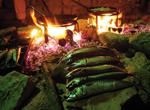 Frischer Fisch aus Norddalmatien