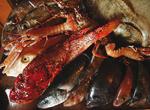 Fischsorten Süddalmatien