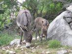 Esel auf dem Landgasthof Baculov Dvor