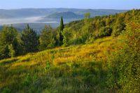 Trüffelgebiet Motovuner Wald