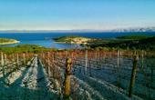 Weingarten Vinarija Tomic