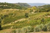 Benvenuti Vina - Weingärten