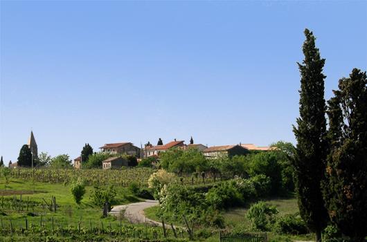 Weingut & Restaurant Sinkovic - Momjan, Istrien, Kroatien