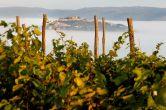 Benvenuti - Weingärten Motovun