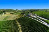 Weingut Kabola & Weingärten