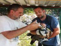 Mitglieder im Verein Birds of Prey Conservation Center