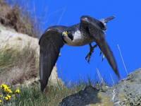Raubvogelschutzzentrum Grifon