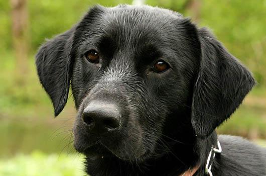 Tierschutzverein Tierhilfe Istrien