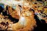 Farbenfroh - Höhle Mramornica, Brtonigla