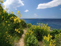 Kap Kamenjak - Natur