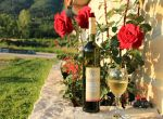 Agrotourismus Konavle - Wein
