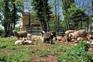 Bauernhoftiere - Agroturizam Sterle