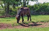Bauernhof Sterle - Pferd