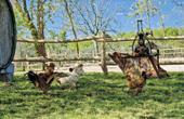 Hühner Bauernhof Sterle