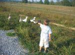 Kinder Selo Strug