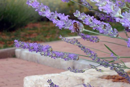 Natura Rab - Lavendel Honig