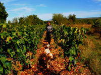 Agrotourismus Kalpic - Landwirtschaft