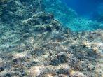 Aktivist Sport Pula - Unterwasserwelt