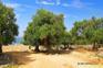 Rab Activity - Olivengärten Lun