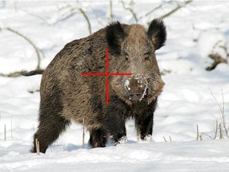 Jagdvorschriften in Kroatien