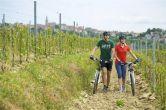 Radfahren Umag-Novigrad - Weingärten