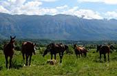 Pferde, Weide