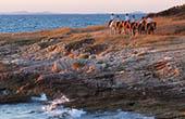 Reitergruppe am Meer