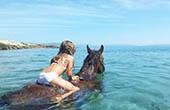 Pferd im Meer, Istrien