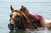 Pferdeschwimmen, Istrien