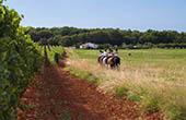 Reitausflug Felder & Weingärten