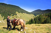 Pferd, Velebit