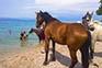 Pferde am Strand, Insel Krk