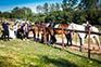 Pferde, Reitclub Njivice