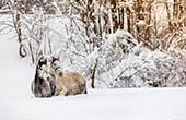 Pferde, Winter