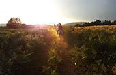 Ausritt, Sonnenuntergang