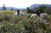Ausritt Ranch Terra