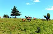 Pferdekoppel, Ranch Equus igni