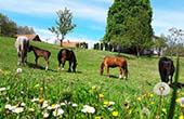 Frühling, Ranch Terra