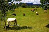 Pferdekoppel, Ranch Terra