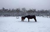 Pferdekoppel, Winter