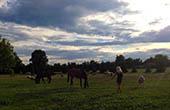 Tiere, Ranch Kurilovec