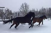 Winter, Pferde