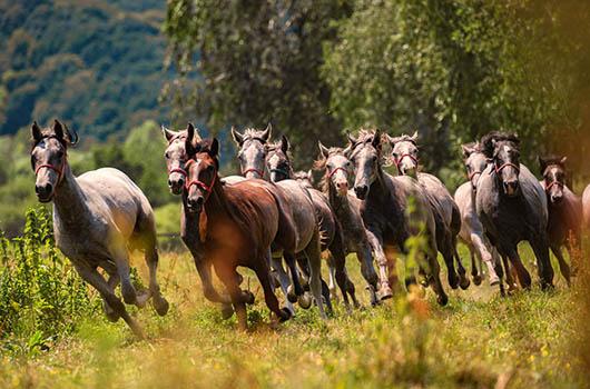 Reiten in Kroatien