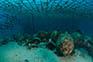 Unterwasser - Insel Pag