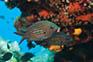 Unterwasserwelt bei Zaglav
