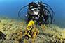 Seepferdchen, Tauchgang Istrien