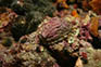 Unterwasserfauna, Kroatien