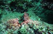 Unterwasserwelt, Fisch, Istrien