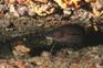 Unterwasserwelt, Kvarner Bucht